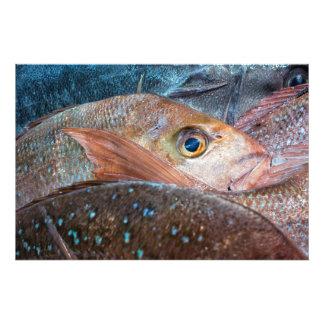 Fresh fish on a market photo