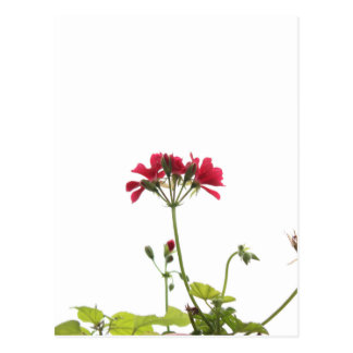 Fresh Flower Postcard