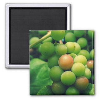 """""""Fresh Fruit"""" Fridge Magnet"""