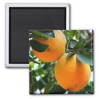 Fresh Fruit - Oranges Magnet