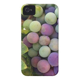 Fresh Grapes and Wine iPhone 4 Case