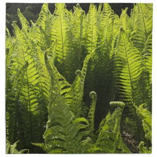 Fresh green fern napkin
