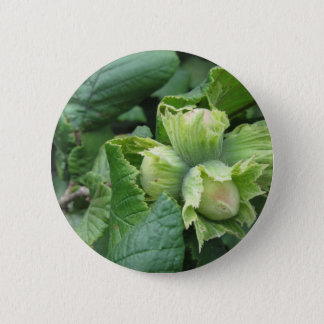 Fresh green hazelnuts are growing on the tree 2 inch round button