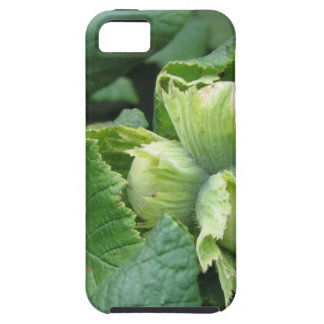 Fresh green hazelnuts are growing on the tree iPhone 5 cases