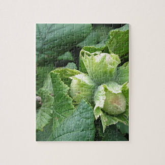 Fresh green hazelnuts are growing on the tree jigsaw puzzle