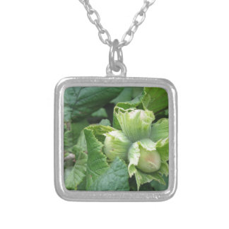 Fresh green hazelnuts are growing on the tree silver plated necklace