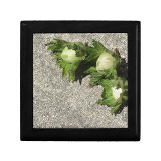 Fresh green hazelnuts on the floor gift box