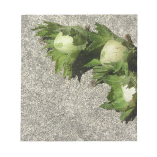 Fresh green hazelnuts on the floor notepad