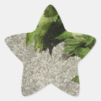 Fresh green hazelnuts on the floor star sticker