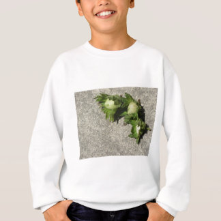 Fresh green hazelnuts on the floor sweatshirt