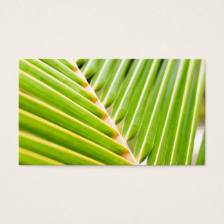 Fresh green palm tree leaves business card