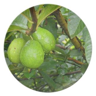 Fresh guava fruits print on plate