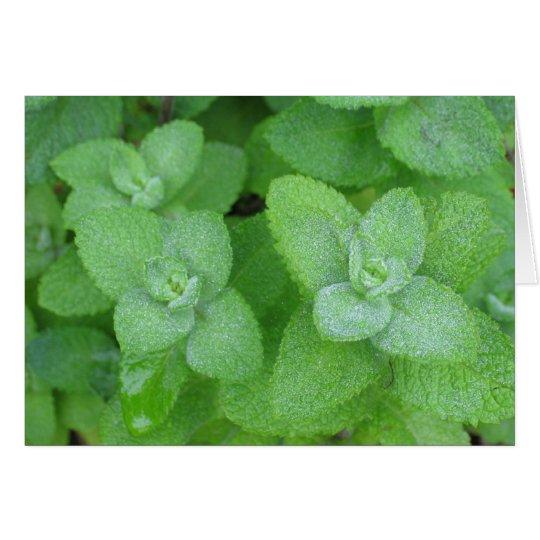 Fresh Herbs Card