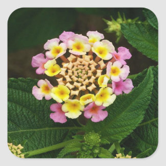 Fresh Lantana Flower Against Leaf Background Square Sticker