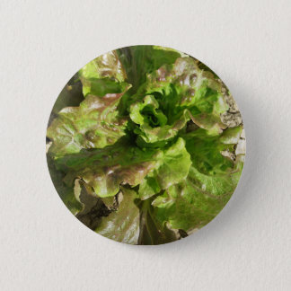 Fresh lettuce growing in the field. Tuscany, Italy 2 Inch Round Button