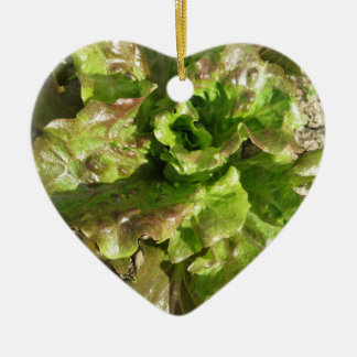 Fresh lettuce growing in the field. Tuscany, Italy Ceramic Ornament
