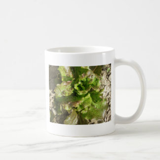 Fresh lettuce growing in the field. Tuscany, Italy Coffee Mug