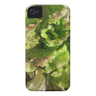 Fresh lettuce growing in the field. Tuscany, Italy iPhone 4 Case