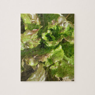 Fresh lettuce growing in the field. Tuscany, Italy Jigsaw Puzzle