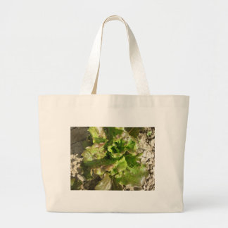 Fresh lettuce growing in the field. Tuscany, Italy Large Tote Bag