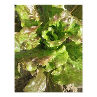 Fresh lettuce growing in the field. Tuscany, Italy Letterhead