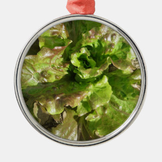 Fresh lettuce growing in the field. Tuscany, Italy Metal Ornament
