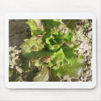 Fresh lettuce growing in the field. Tuscany, Italy Mouse Pad