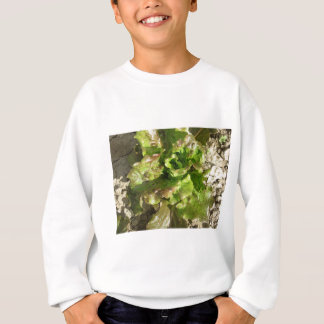 Fresh lettuce growing in the field. Tuscany, Italy Sweatshirt