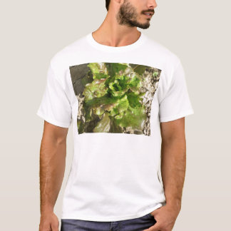 Fresh lettuce growing in the field. Tuscany, Italy T-Shirt
