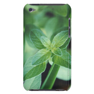 Fresh mint leaf barely there iPod covers