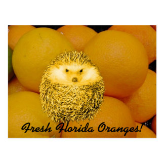 Fresh Orange Hedgehog Postcard