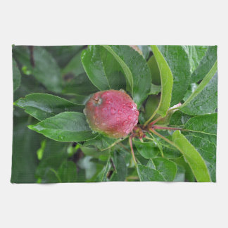 Fresh red apple on tree towels