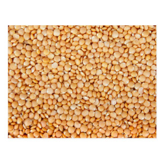 Fresh Red Lentils Postcard