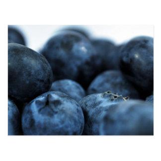 Fresh Ripe Blueberries Postcards