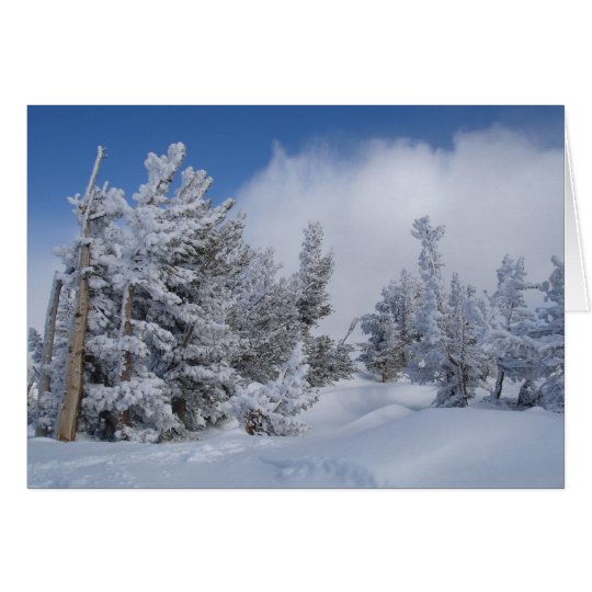 Fresh Snow on Mammoth Mountain Card