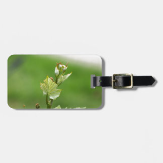 Fresh sprouts of grape vine bag tag
