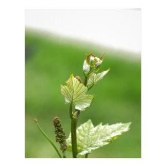 Fresh sprouts of grape vine custom letterhead