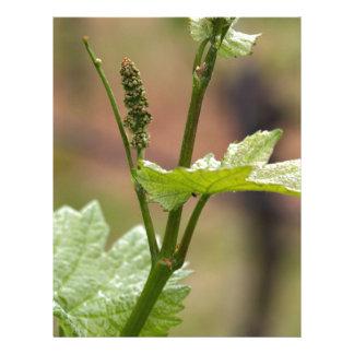 Fresh sprouts of grape vine letterhead design