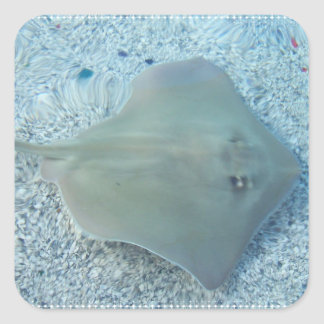 Fresh Water Stingray Sticker