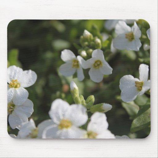 Fresh white summer garden flowers and green leaves mousepads