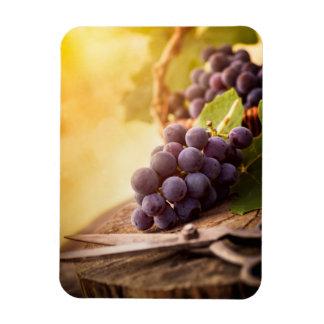 Freshly Harvested Grapes Rectangular Magnet