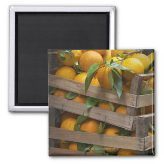 freshly picked oranges square magnet