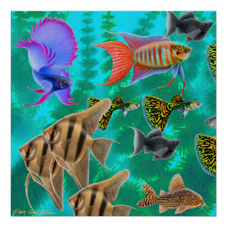 Freshwater Aquarium Fish Poster