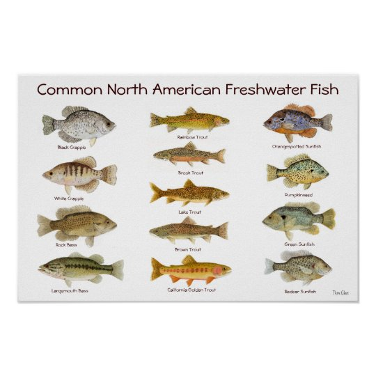 Freshwater fish poster for Freshwater fishing in southern california