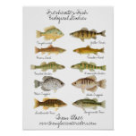 Freshwater Fish Poster