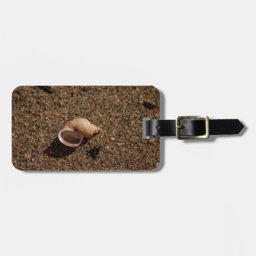 Freshwater Snail Shell; No Text Tags For Luggage