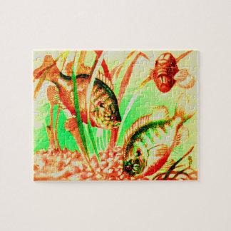 freshwater sunfish jigsaw puzzle
