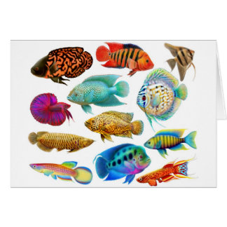 Freshwater Tropical Fishes Card