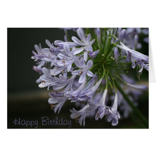 Friend Happy Birthday Blue Agapanthus Card