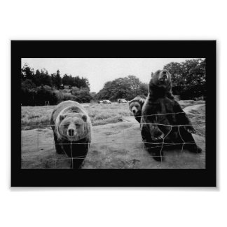 Friendly Bears Art Photo